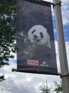 Calgary Alberta Zoo and pandas