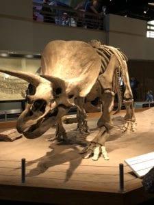 dinosuars in alberta 2018