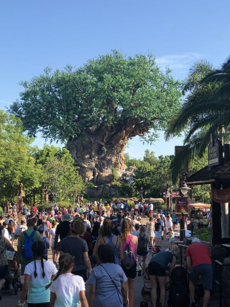 Disney World Vacations 2019 theme parks Animal Kingdom