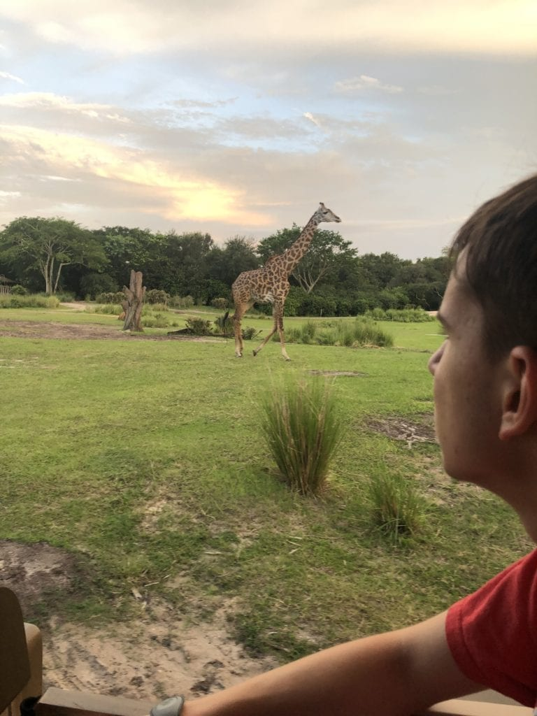 Disney World Vacations 2019 theme parks Animal Kingdom giraffes in Kilimanjaro safari